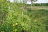 Zur neuen Förderperiode werden für die Anlage von einjährigen oder mehrjährigen Blühstreifen und -flächen 680 €/ha gewährt - Foto: LU