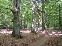 Morsche Bäume müssen aus Sicherheitsgründen weichen.